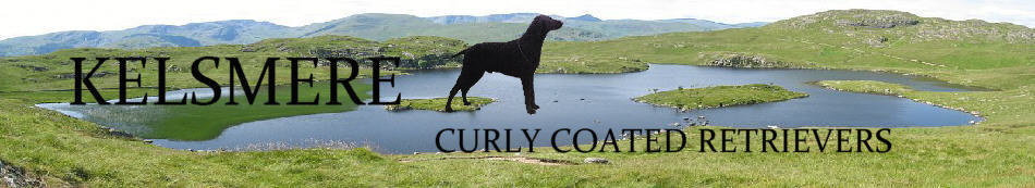 Banner Heading) Kelsmere Curly Coated Retrievers